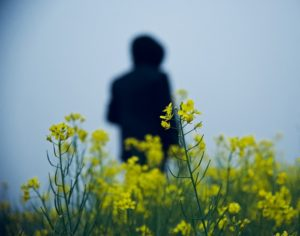 The silhouette of a person standing in a field with yellow mustard flowers.