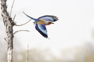 Colorful bird taking flight